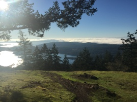 December on Turtleback